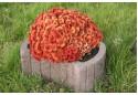 Квітник вібропресований Золотой Мандарин Круглий 500х400х250 мм сірий